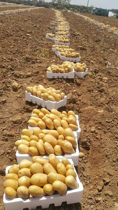 Grape Vineyard, Fresh Vegetables, Cleanse, Stuffed Mushrooms, Potatoes, Food, Gardens, Fruit Garden, Vegetables Garden