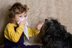 Alergia a los gatos: causas, síntomas y remedios