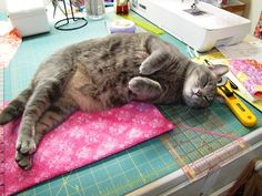 Gwennie the Quilting Kitty one happy cat [ Microwave Bowl Holder Tutorial ]