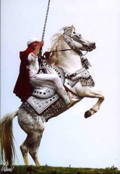 Fantasia Marocaine Spectacles Equestre