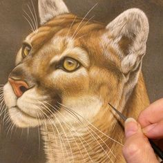 "#mulpix Cougar in progress, 11"" x 14"", detail, watercolor on board with sterling silver, Rebecca Latham #wildlife #watercolor #art #animals #painting #miniature #nofilter #artist #miniatureart #realism #animallovers #cougar #mountainlion #puma #workinprogress"