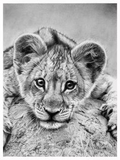 little lion by francoclun.deviantart.com on @DeviantArt, THIS IS A DRAWING!!! WOW. artist uses graphite