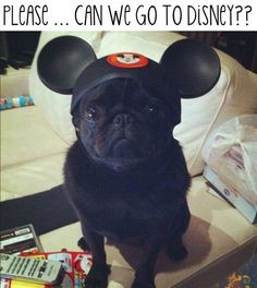 I want to take that sweet, little pup to Disney Land now!