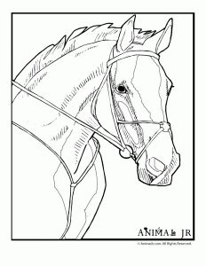 Free Horse Pictures To Color | horse coloring page 1 232x300 Horse Coloring Pages