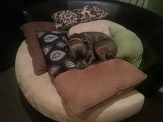 Day 1.Male english staffy sneaking a snooze on the barrel. Those cushions are to stop sleeping staffy's :)