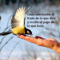 JUANA MACEDO Facundo Cabral, Biblia, Frases y Reflexiones: Cada uno recibe el fruto de lo que dice y recibe e pago de lo que hace