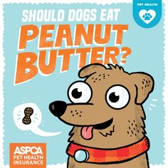 Creamy or crunchy, peanut butter can be a nice treat for your pooch or a  little incentive to get the medicine to go down. In most cases, and in  moderation, a little peanut butter is fine. However, pet parents do need  to avoid any peanut butter that contains xylitol, an artificial  sweetener that can be lethal to dogs.