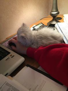 Fell asleep working with me!!!
