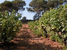 Domaine de L'ile. Porquerolles. #sun #seasnowsun #tourisme #tourism #france #pacatourism #pacatourisme #PACA #provencal #tourismpaca #tourismepaca #vin #wine #oenotourisme #vitivinicole #vigne #raisins #grapes #vineyards #cave #domaine #lile #ile #porquerolles