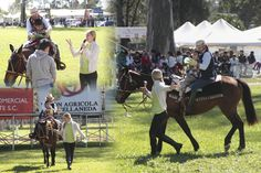 Equinoterapia Horses, Exhibitions, Events, Animales, Horse