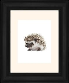 Baby Hedgehog Framed Print, Black, Classic, None, Cream, Single piece, 11 x 14 inches