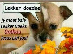 Lekker Doedoe Goeie Nag, Afrikaans Quotes, Cute Quotes, Good Night, Chihuahua, Dog Breeds, Cute Dogs, Quotations, Teddy Bear
