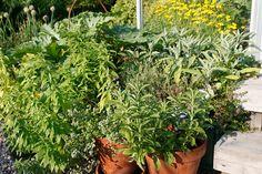 Yrttien kasvatus - Kotipuutarha Healthy Recipes, Plants, Zero Waste, Tips, Healthy Eating Recipes, Plant, Healthy Food Recipes, Clean Eating Recipes, Healthy Diet Recipes