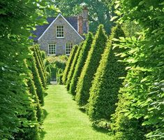 Clipped yews echo the shapes of the garden houses and, along with upright hornbeams, define a long central access in this classic English garden. From Traditional Home.