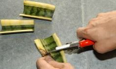Hydroponic Gardening, Hydroponics, Gardening Tips, Plantas Indoor, Architectural Plants, Herbs Indoors, Modern Buildings, Houseplants, Indoor Plants