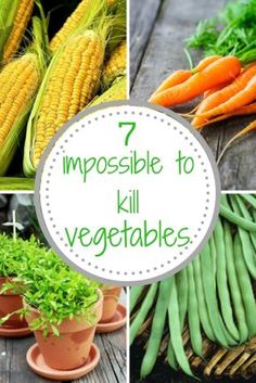 Easy to Grow vegetables that are hard to kill