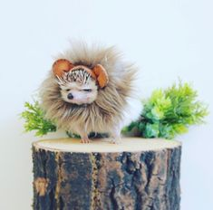 Be a lion even if you're a hedgehog