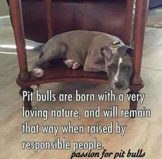 Uplifting So You Want A American Pit Bull Terrier Ideas. Fabulous So You Want A American Pit Bull Terrier Ideas. Amstaff Terrier, Bull Terrier Dog, Terrier Mix, Pitt Bulls, Dog Quotes, Pit Bull Quotes, Pit Bull Love, Dogs And Puppies, Doggies