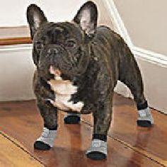 Set of 8 Traction Control Socks for dogs!