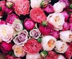 #florals #flowers #bright #cheery #pink #purple