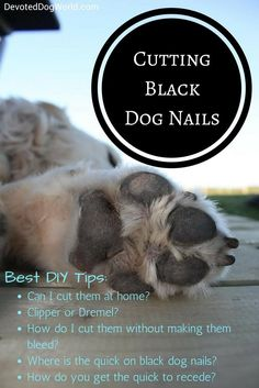 Learn how to trim black nails on dogs without cutting the quick and making your dog bleed. Here are the best tips to cut black dog nails at home. It's so easy once you know the trick. Learn here, pictures included. Clipping Dog Nails, Trimming Dog Nails, Dog Separation Anxiety, Dog Grooming Tips, Best Dog Training, Aggressive Dog, Dog Hacks, Old Dogs, Black Nails