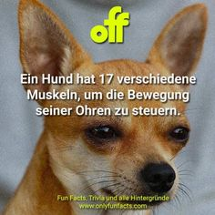 50 unglaubliche Fakten über Hunde - Only Fun Facts Animal Facts, Corgi, Animals, Unbelievable Facts, Boyfriend, Pet Dogs, Facts About Animals, Animales, Animaux