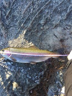 41 RI Trout Fishing Season Best Baits and Lures for Opening Day RI