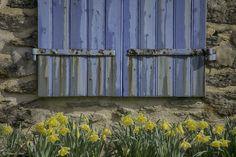 Les Volets Bleus Britanny Blue Shutters @Philippe Le Stum #shutters #volets #spring #printemps #daffodils #jonquilles #stone #pierres #Morbihan #Bretagne #photography #PhilippeLeStum
