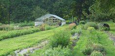 Urban Flower Farm: Love 'n Fresh in Philadelphia by Jeanne Rostaing