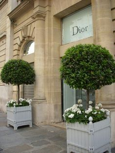 Topiaries outside of Dior