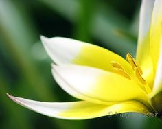 Spring Flower Photo Inspirations - Blissfully Domestic