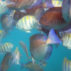 what I imagine snorkeling will be like in Aruba #aioutlet