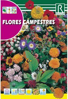 Egynyári virágok : Virágkeverék Campestres Pandora, Yearly, Flowers