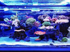 I love the water flow in this reef Saltwater Aquarium Setup, Saltwater Fish Tanks, Marine Aquarium, Reef Aquarium, Aquarium Fish Tank, Saltwater Fishing, Marine Fish Tanks, Marine Tank, Nano Reef Tank