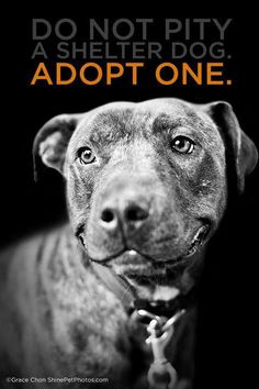 Do not pity a shelter dog...adopt one...