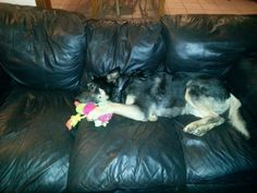 my couch, my toy!!