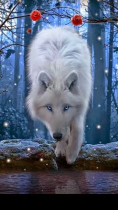 white wolf such beauty with blue eyes