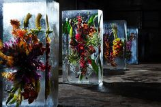 Flowers frozen in ti