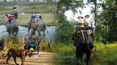 India is known worldwide for rare and endangered wildlife which are not found in any other part of the world. if need any wildlife tour package in India please contact Us. #Wildlifetour #Wildlifetourpackage #WildlifetourpackageIndia