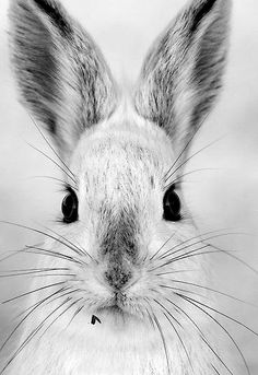 Hoppy Easter~♛ Please use cruelty free products. Bunny??????// I'm a hare! ahah