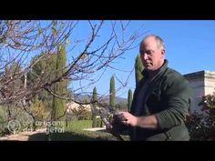 Comment tailler un abricotier, un cerisier, un prunier, un pêcher ,... ? - YouTube