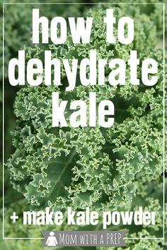 How to Dehydrate Kale for Making Kale Chips or Kale Powder - fabulous method to preserve kale well past the season! // Mom with a PREP = making kale powder is genius! Dehydrated Vegetables, Kale Recipes, Raw Food Recipes, Drink Recipes, Vegetarian Recipes, Kale Powder, Making Kale Chips, Canning Recipes, Kale