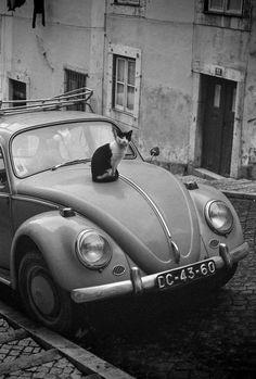 Dark Silence In Suburbia — Alfredo Cunha Bairro Alto, Lisboa, Portugal,. Photo Black, Black White Photos, Black And White, I Love Cats, Cool Cats, Animal Photography, White Photography, Cat Art, Animal Pictures