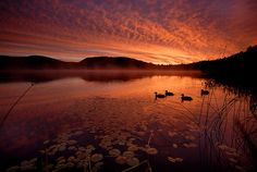 Sunrise with Ducks by Peter Bowers, via Flickr
