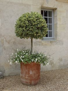 French terracotta pot on a gravel terrace ideas on how to add a French accent to your garden. Tuscan Garden, Italian Garden, Mediterranean Garden, Garden Cottage, Provence Garden, Garden Bed, Back Gardens, Outdoor Gardens, Small Courtyard Gardens