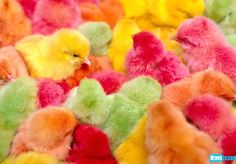 pastel chicks