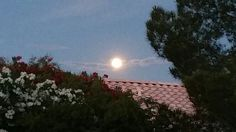 Beautiful picture of the moon outside my back door! Back Doors, The Outsiders, Beautiful Pictures, Moon, Celestial, Sunset, Nature, Outdoor, The Moon