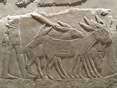 Ancient Canaanites Imported Animals from #Egypt to be Sacrificed