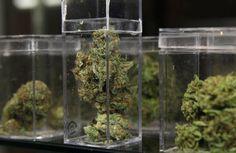 Nearly 90 percent of Minnesota patients say medical marijuana helps - http://houseofcobraa.com/2016/06/07/31507/