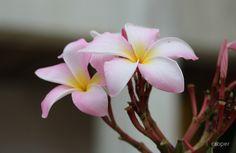 Tropical Flower1